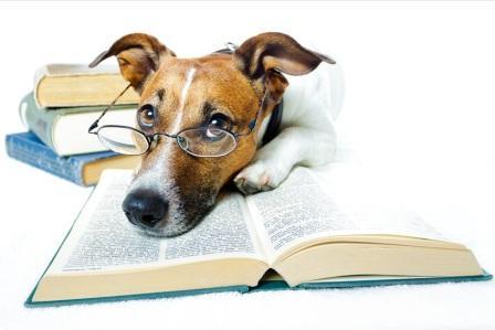 Lesens-/Flattrnswert