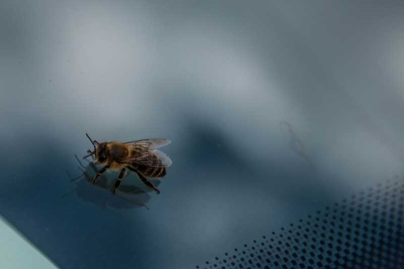 bee on glass