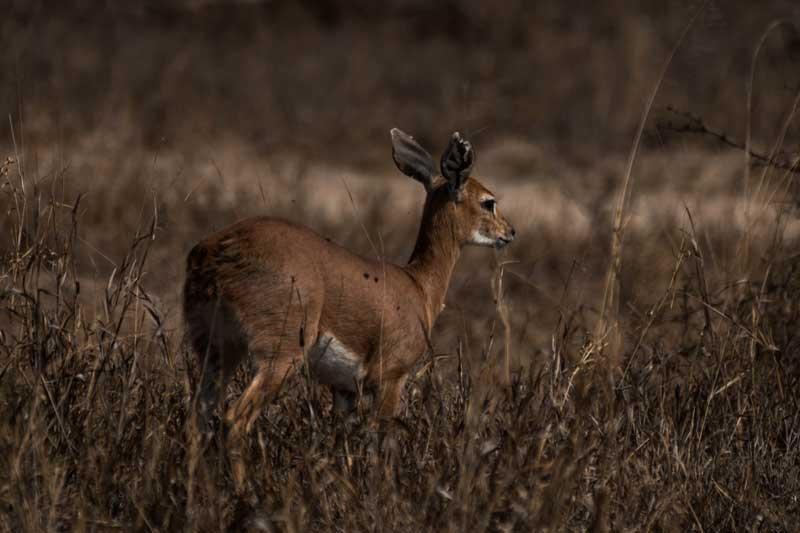 South Afrika - Kruger National Park - vacation