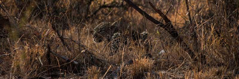 South Africa - Kruger National Park - vacation