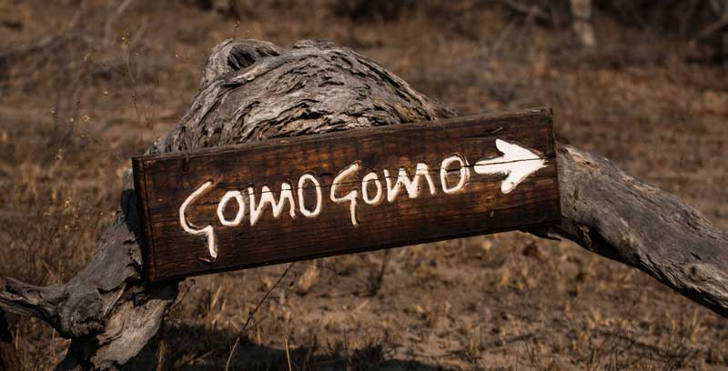 South Africa - GomoGomo Game Lodge - vacation