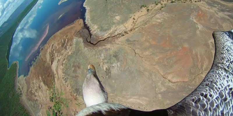 Eartflight - Die fantastische Reise der Vögel