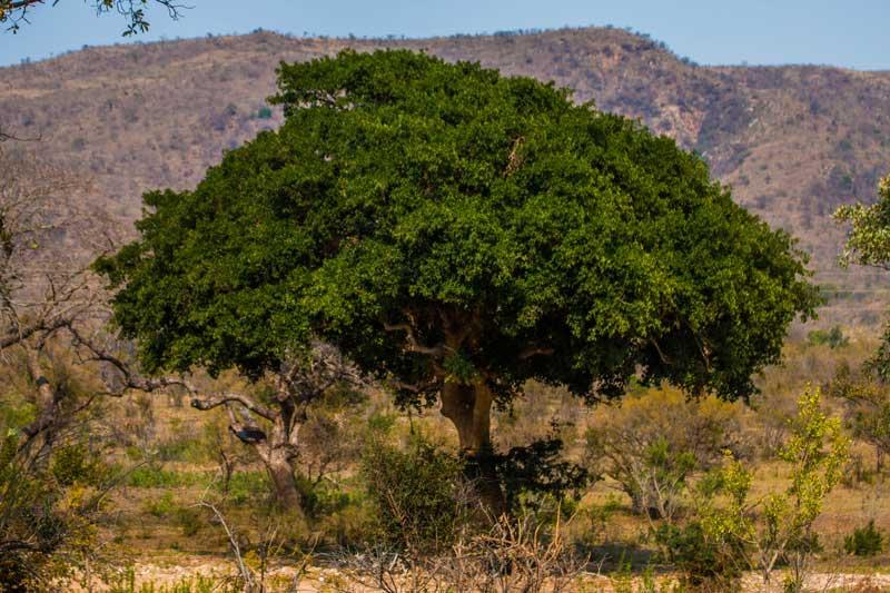 South Africa - Kruger National Park - Berg-en-Dal - vacation